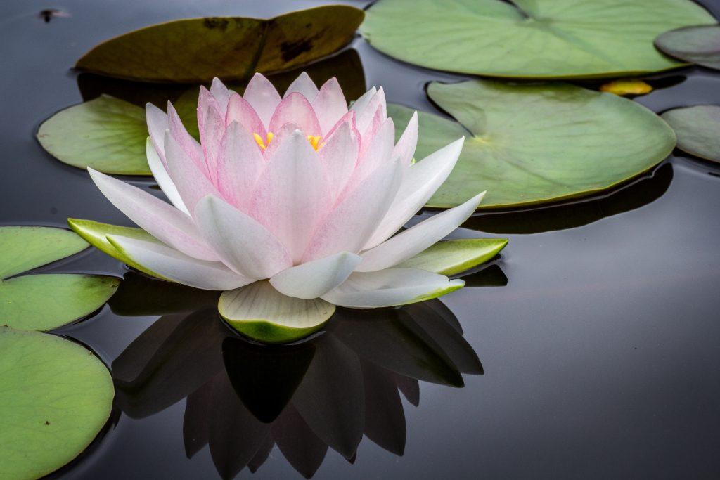 lotus-al-a-carte